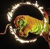 Цирки в Калуге