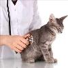 Ветеринарные клиники в Калуге